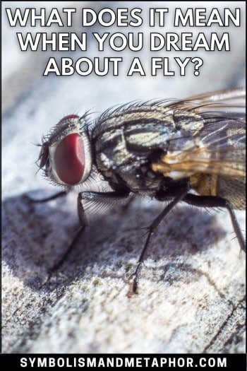 fly dream meaning