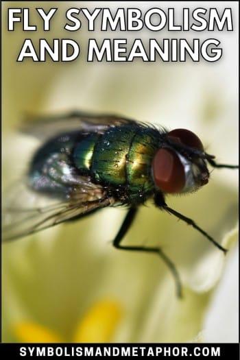 fly symbolism