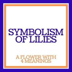 symbolism of lilies