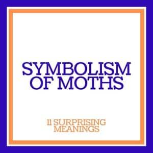 symbolism of moths
