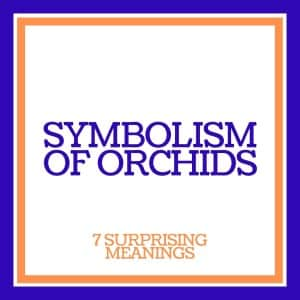 the symbolism of orchids: 7 surprising meanings
