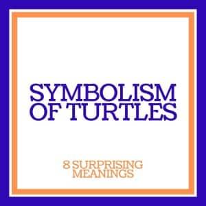 symbolism of turtles