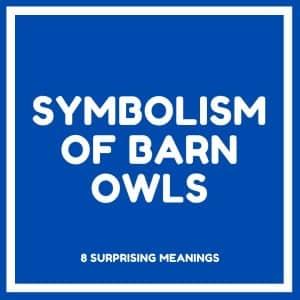 symbolism of barn owls