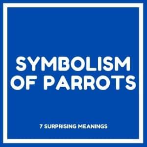 symbolism of parrots