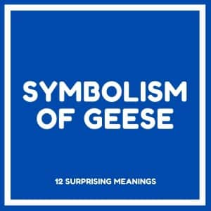 symbolism of geese