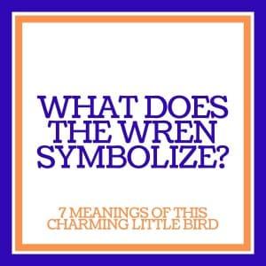wren symbolism