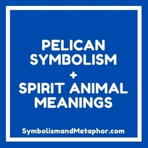 pelican symbolism and spirit animal meanings