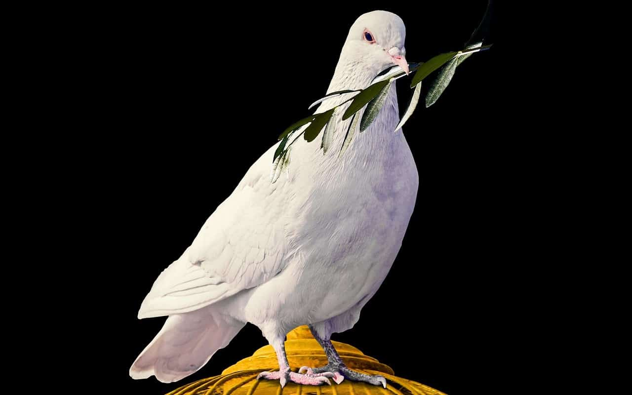 dove holding an olive branch