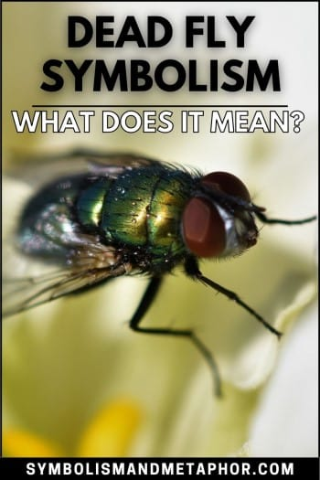 dead fly symbolism and meaning