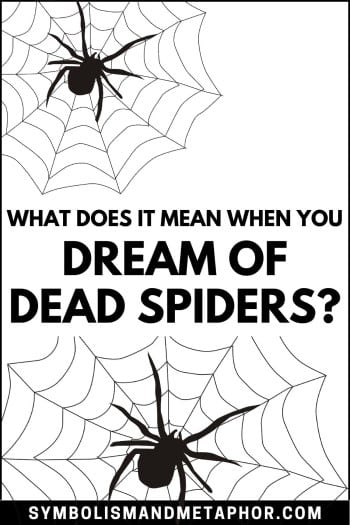 dead spider dream meaning