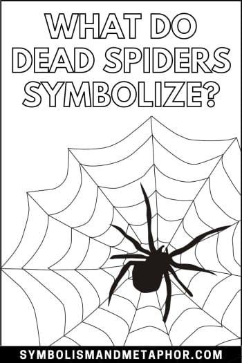 dead spider symbolism