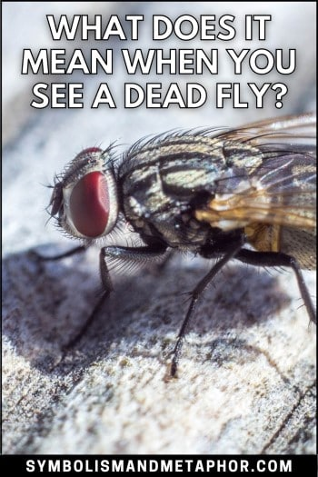 what does it mean when you see a dead fly