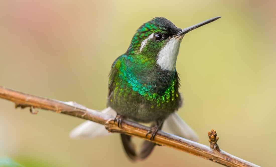dead hummingbird symbolism