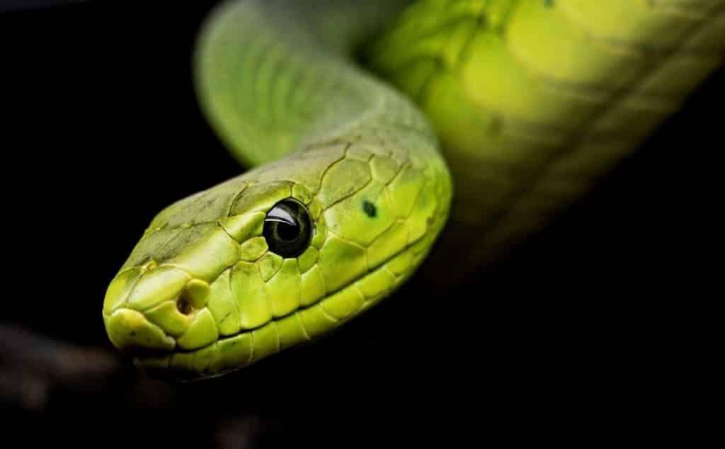dead snake symbolism