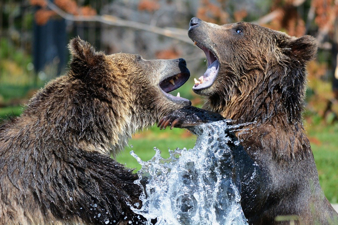 grizzly bears in dreams