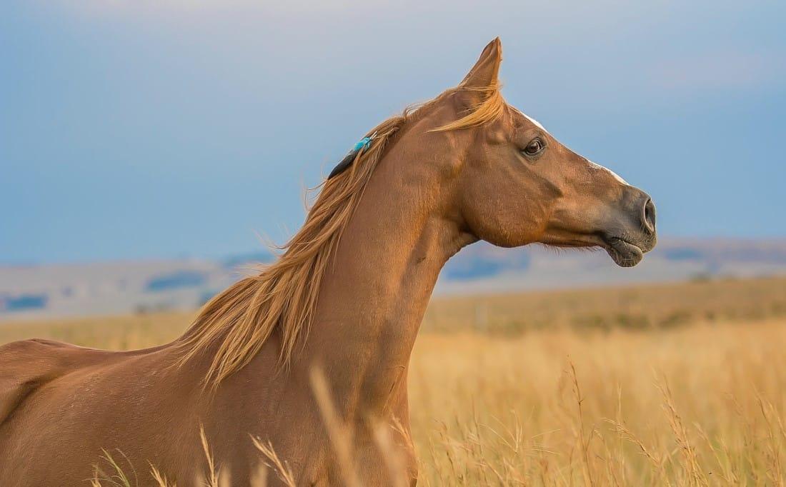 red horse symbolism